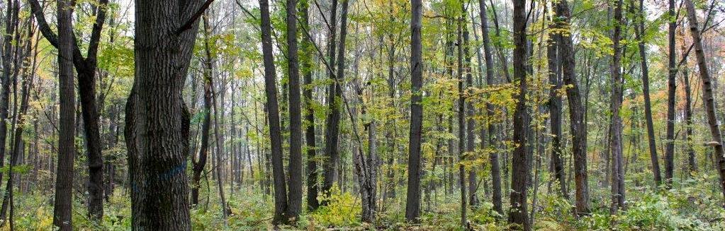 uncut trees